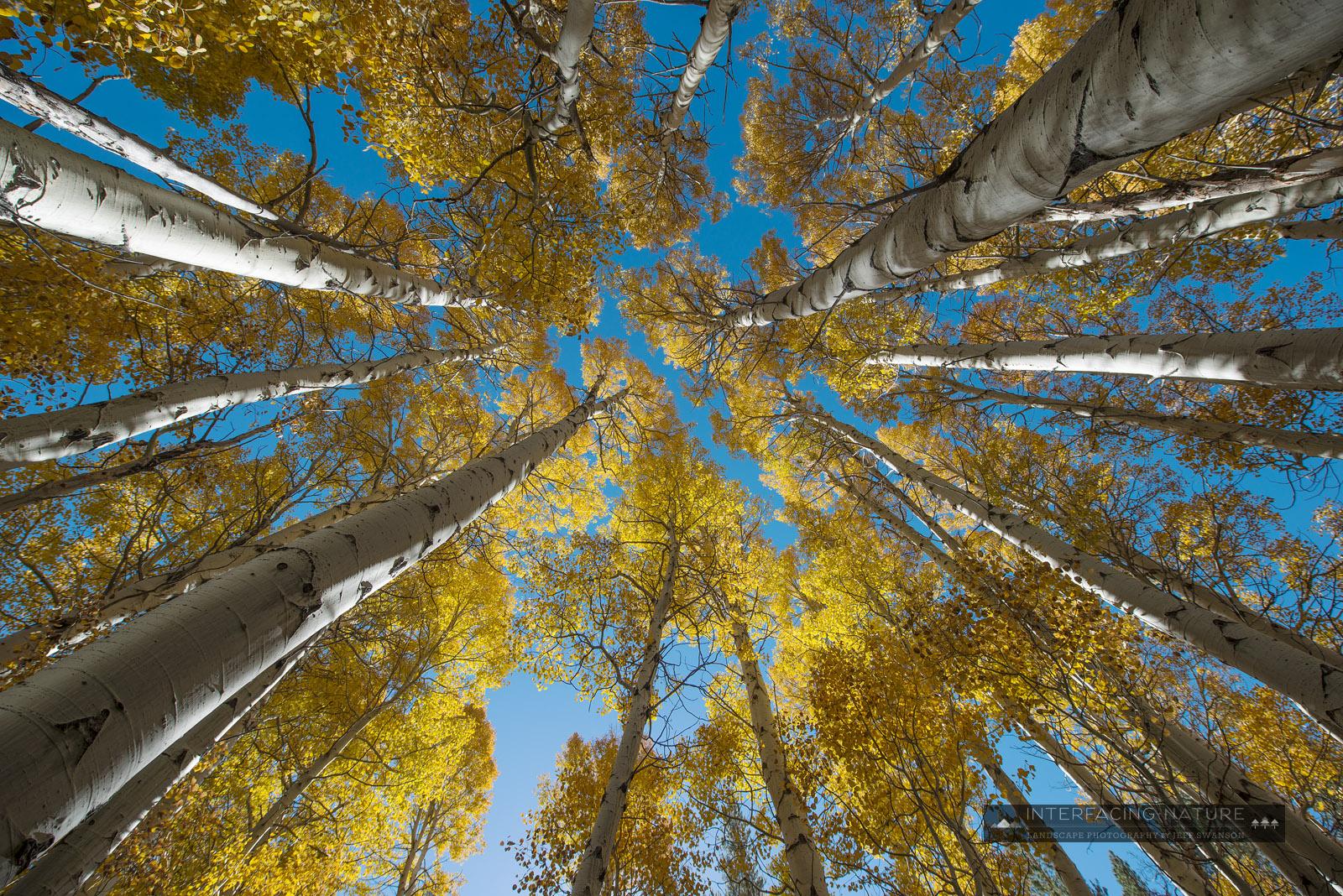 Interfacing Nature Autumn